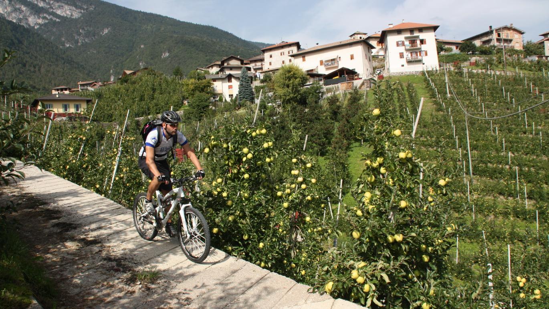 6. Etappe (ost): Typisch für das Trentiner Nonstal sind die Apfelplantagen entlang der Dolomiti di Brenta