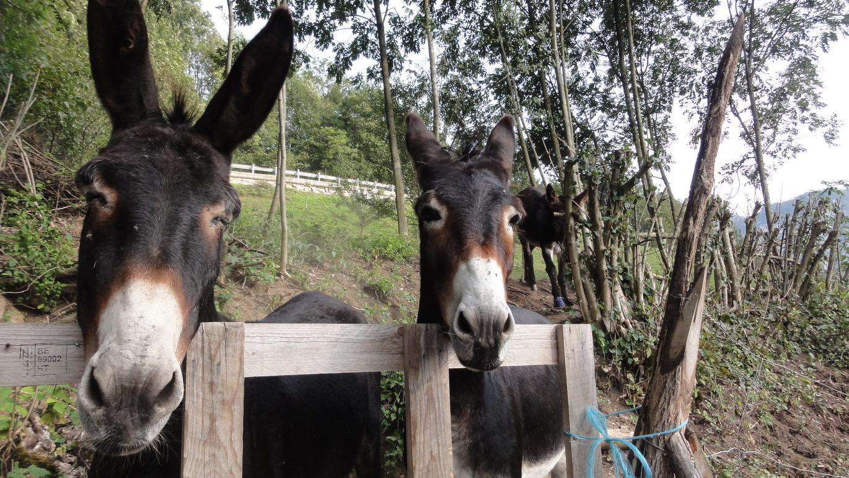 Tag 7: Neugierige Beobachter säumen den Weg auf der letzten Etappe von Ponte Arche über das Lomaso zum Ballinopass
