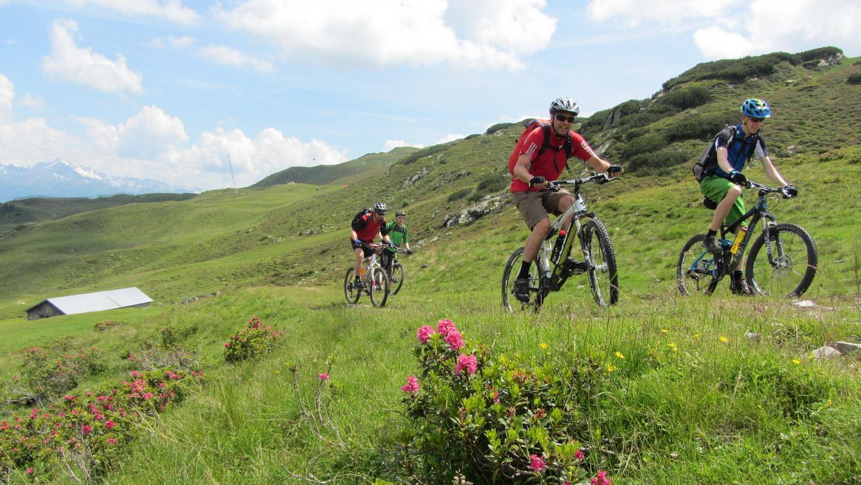 Tag 4: Alpenrosen blühen auf der weitläufigen Alpweidelandschaft der Rinner Alm