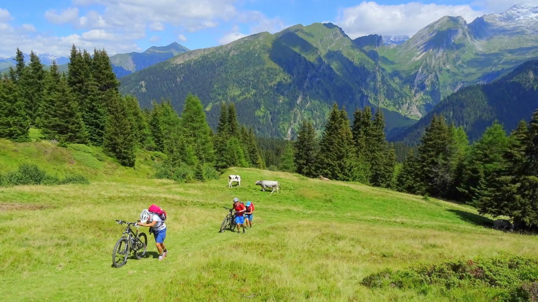 3. Etappe: Steile Schiebepassage oberhalb vom Brenner von der Sattelalm hinauf zum Sattelberg